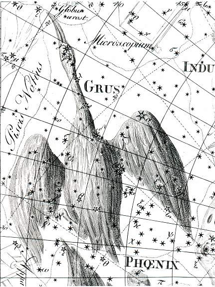 GRUs is a constellation in the Southern sky. It's name is Latin for the crane. GRUs is also a genus of large birds in the crane family.