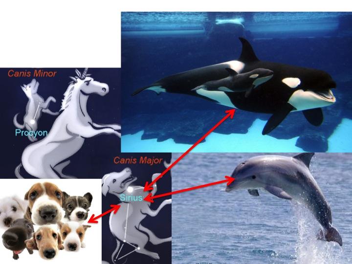 Sirius Canidae Cetaceans