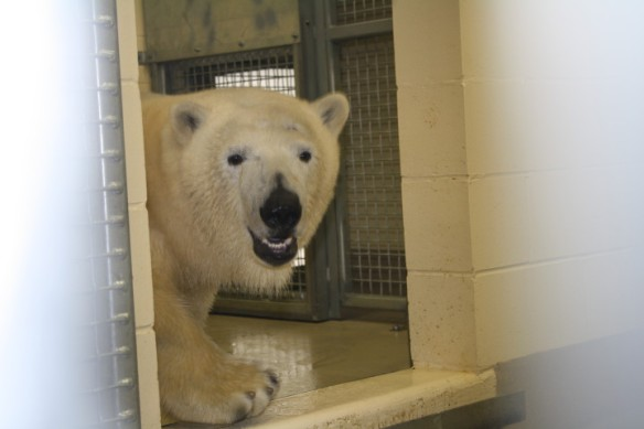 HUDSON, the POLAR BEAR that Prince Charles and Camilla will meet next month. HUDSON is KATY PERRY's real last name.